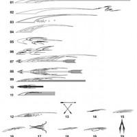 DXF Custom Pinstripe 7