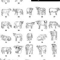DXF Horses & Farm Animal Designs 4